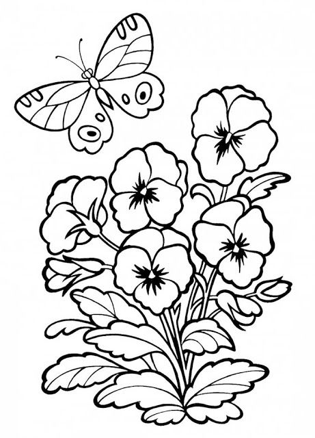 8 Free Downloads Anti Stress Coloring Pages Pansies Color Hint