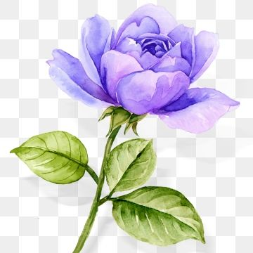 Atmospheric Watercolor Hand Painted Blue Purple Rose Flower Watercolor Flower Blue Rose Flowers Png Transparent Clipart Image And Psd File For Free Download In 2020 Purple Roses Watercolor Flowers Rose Flower Png