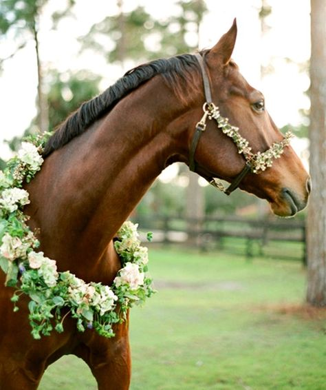Equestrian Inspired Rustic Engagement - Once Wed