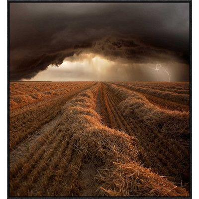 "Global Gallery 'Untitled' by Franz Schumacher Framed Photographic Print Size: 30"" H x 27.9"" W x 1.5"" D"