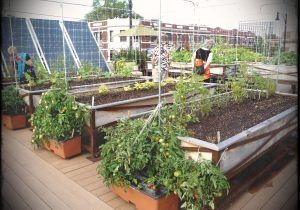 Partial Shade Its Vital Role In Organic Vegetable Gardening