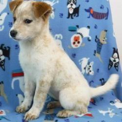 Available Pets At Wright Way Rescue In Morton Grove Illinois Dog Rescue Idea Dog Adoption Pets