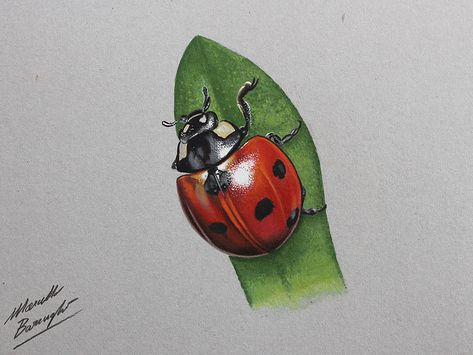 Ladybug Drawing By Marcello Barenghi By Marcellobarenghi On