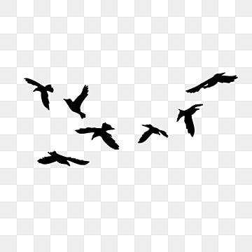 Bird Flying Silhouette Animal Profile Feather Png Transparent Clipart Image And Psd File For Free Download Birds Flying Bird Illustration Bird