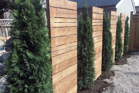 Pine Tree And Wood Panels Luxury Privacy Fence backyard privacy Top 50 Best Privacy Fence Ideas - Shielded Backyard Designs Privacy Fence Designs, Privacy Landscaping, Privacy Fence Panels, Landscaping Ideas, Trellis For Privacy, Back Yard Privacy Ideas, Outdoor Privacy Screens, Privacy Fence Decorations, Cheap Privacy Fence