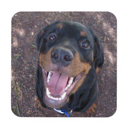 Happy Heidi Rottweiler Coasters Zazzle Com Rottweiler