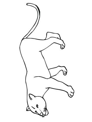 13 Incroyable Jolie Coloriage Panthere Gallery Coloriage Champignon Dessin Livre Coloriage
