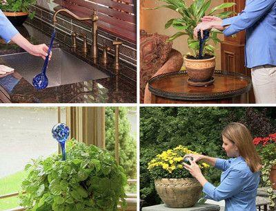 Aqua Globes Kule Nawadniajace Kwiaty Aqua Plants Globe