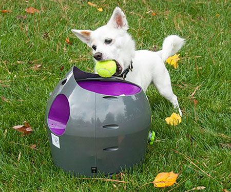 Cool Pet Products In 2020 Dog Toy Ball Dog Toys Automatic Ball Launcher