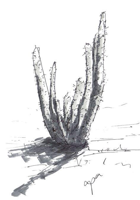 Cactus Pen Sketch