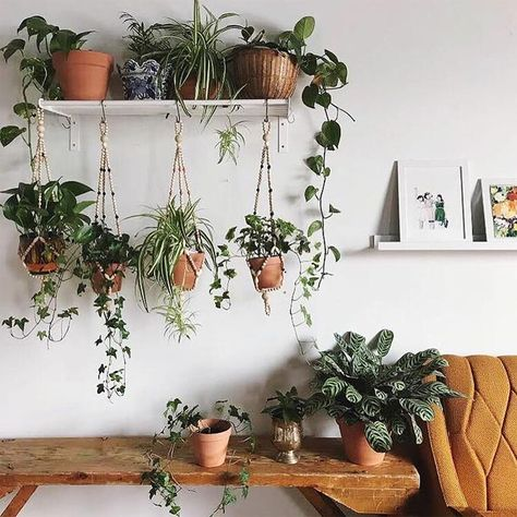 The 72 Best Home Decor Ideas Today (with Pictures) - Plant Wall Goals! Hand Made Hand Made , The 72 Best Home Decor Ideas Today (with Pictures) - Plant Wall Goals! Hand Made The 72 Best Home Decor Ideas Today (with Pictures) - Plant Wall . Wall Hanging Plants Indoor, Best Indoor Plants, Hang Plants On Wall, Plants On Walls, Hanging Plant Diy, Indoor House Plants, Indoor Plant Decor, Indoor Shade Plants, Ivy Plant Indoor