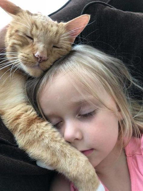 Die Katze lächelt tatsächlich.  - Burcu Demir - #Burcu #Demir #die #Katze #lächelt #tatsächlich - Die Katze lächelt tatsächlich.  - Burcu Demir