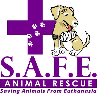 healthy pets adoption