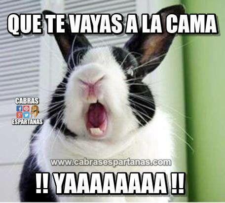 Memes Chistosos De Buenas Noches Con Frases Divertidas Para Reir Funny Memes Funny Phrases Sleep Funny