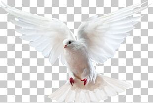 Bird Logo Icon Vector Logo Icons Bird Icons Sign Png And Vector With Transparent Background For Free Download Bird Logo Design Dove Logo Design Simple Logo Design