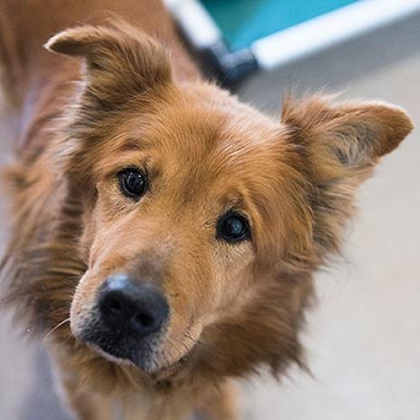 Adopt From Our Sanctuary Animals Animal Sanctuary Dog Adoption
