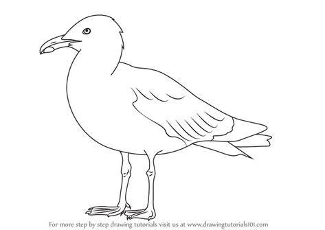 Learn How To Draw A Herring Gull Seabirds Step By Step Drawing Tutorials Vogel Zeichnen Malen Und Zeichnen Malerei