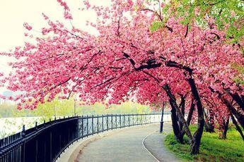 Pin Oleh Himatul Husna Di Sakura Pemandangan Pemandangan Kota Bunga Sakura