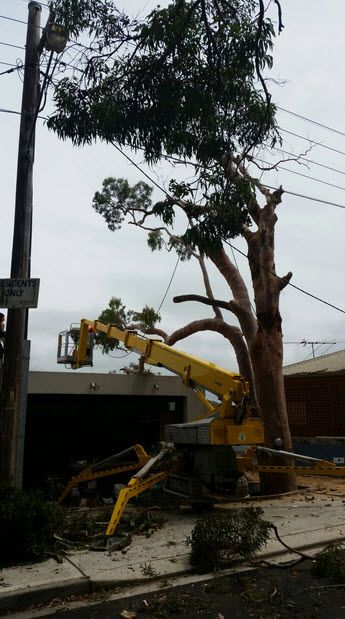 Emergency Tree Removal Mortdale In 2020 Tree Removal Garden Services Tree Removal Service