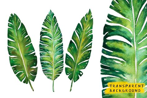 Banana leaves watercolor plant botanic painting on white background, vector illustration - stock photo