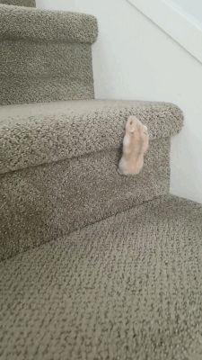 I wonder where does she go? [GIF]