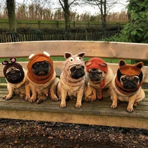 Do You Love Pugs As Much As We Do Bubblebecca Pugs