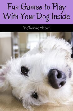 Fun Games To Play With Your Dog Inside Dog Training Tips Dog