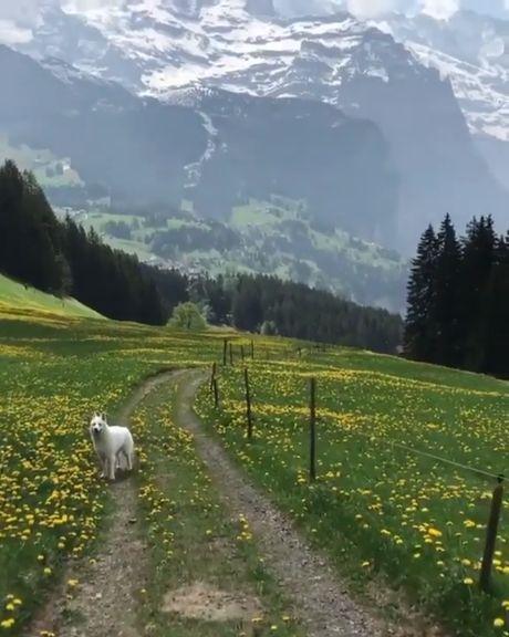 Walking through paradise with your best friend. Wengen, Bern, Switzerland.
