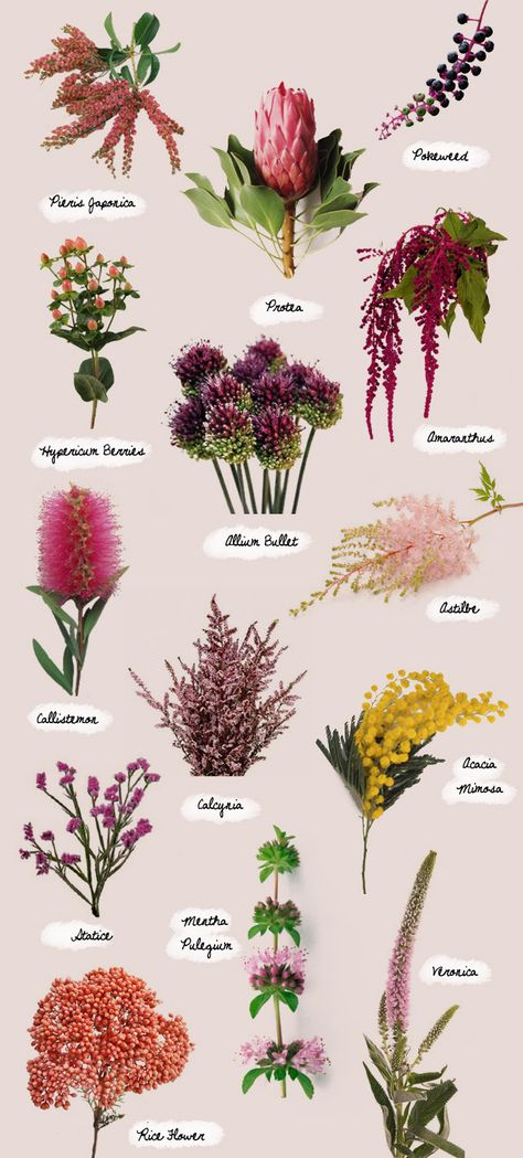 Flowers of the Moment. From left to right, top to bottom: Pieris japonica, Protea, Pokeweed, Hypericum berries, Allium Bullet, Amaranthus, C...