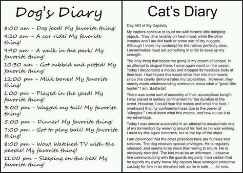 Dogs and cats!Lol