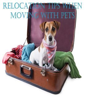 Relocation Tips When Moving With Pets Moving Pets Relocation Tips In 2020 Pet Travel Pet Friendly Cabins Pet Hotel