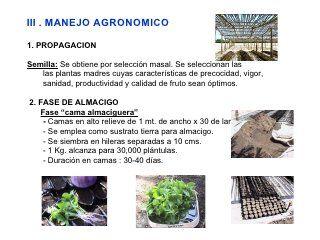 Manejo Tecnico Del Cultivo De Maracuya C Ch Maracuya Cultivo De Plantas Plantas