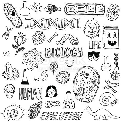 Hand-drawn biology inspired images. The background is white. All ...