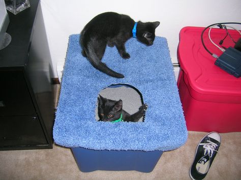 Homemade Top-Entry Covered Litter Box