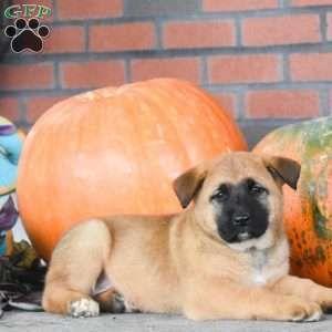 Puppies For Sale Under 300 Price Under 300 Greenfield
