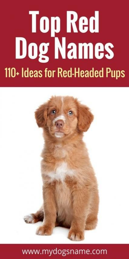 Trendy Dogs Names Boy Golden Retrievers 20 Ideas Dog Names Cute Names For Dogs Best Dog Names