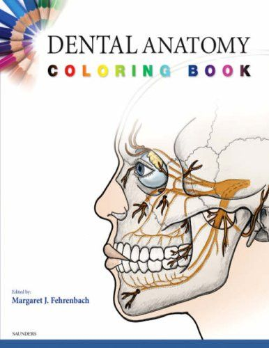 Dental Anatomy Quickstudy Academic