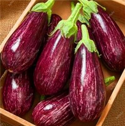 100 pcs Long Eggplant easy planting vegetables