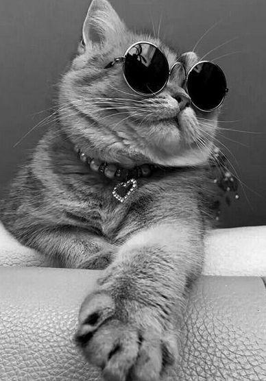 Cat Discover Top 100 Best Fancy Male Cat Names Petpress Cute Baby Cats Cute Cat Memes Baby Cats