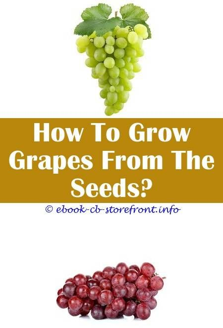 10 Outstanding Hacks Grape Growing Questions Growing Brazilian Grape Tree How Can I Grow Grapes From Seeds How Long To Grow Concord Grapes Grape Growing Lanzar