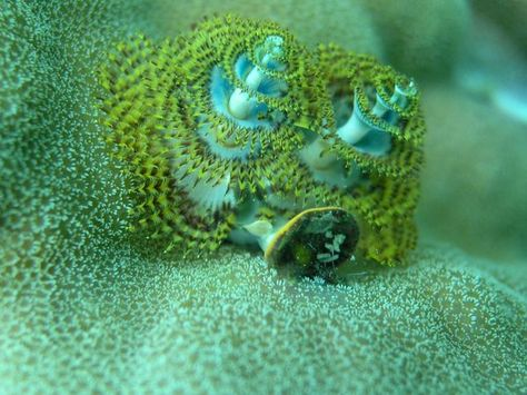 Pin On Coral Sponges Seaweeds And Other Sessile Marine Organisms