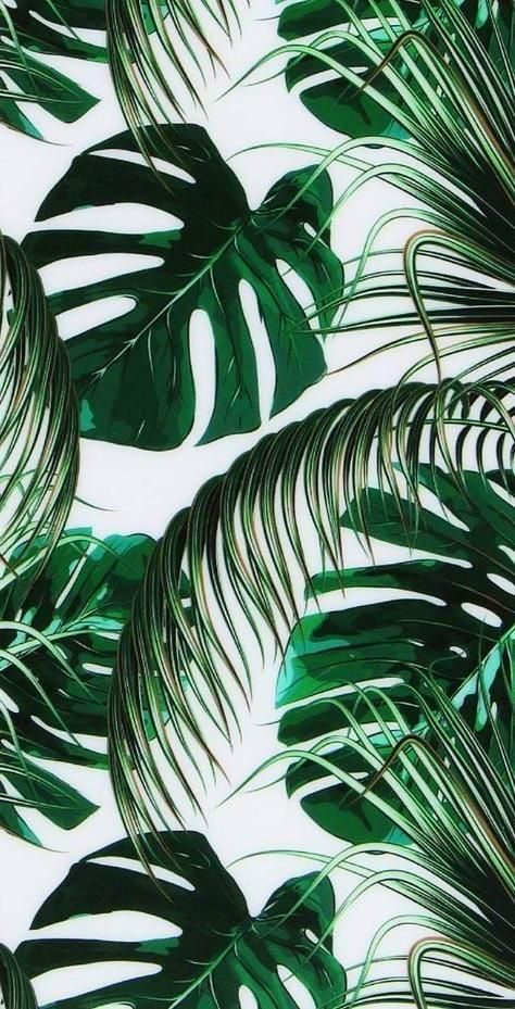 Wallpaper Backgrounds Leaves Wallpaper Iphone Iphone Wallpaper Green Green Leaf Wallpaper Wallpaper iphone aesthetic leaves