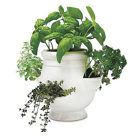 Wind Weather 8 Porcelain Herb Planter W Seeds On Sale At