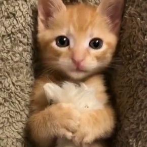 Miiyaow Cutekittens Kittens Catsandkittens Kittens Cutest