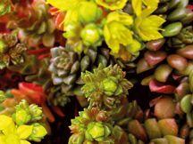 Giromagi Cactus Vendita Piante Grasse Online Piante Grasse Cactus