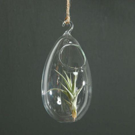 DIY - Como fazer Terrários e Mini Jardins em um Vaso de Vidro - Decostore