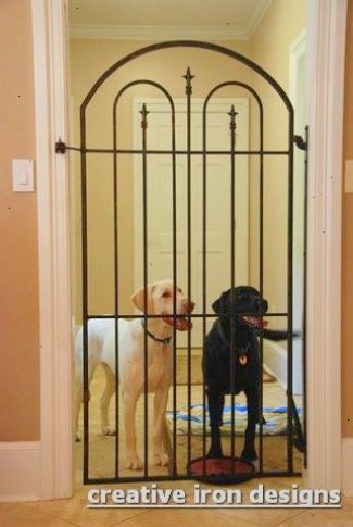 Get This Pet Dogs For Sale In Chennai Exceptional Dog Rooms