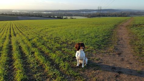 View from Flackwell Heath across to Bourne End river Thames with Lilly