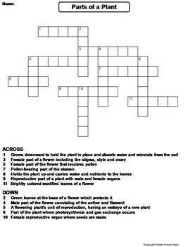 Image Result For The Parts Of The Mass Worksheet Parts Of A Plant Crossword Puzzle Crossword