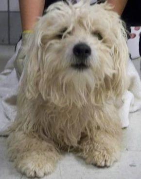 Animal Id T35623188 R Nspecies Tdog R Nbreed Tpoodle Standard